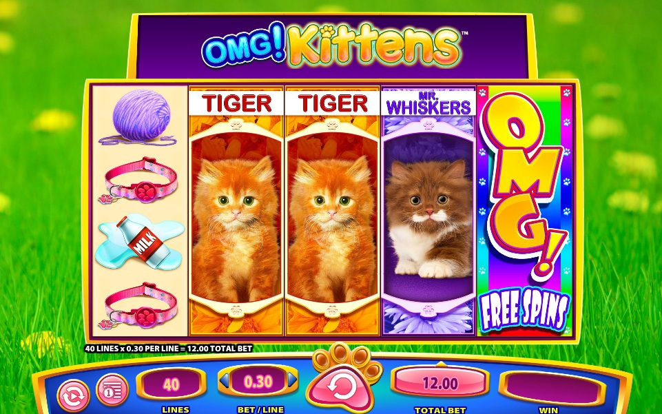 OMG! Kittens 1
