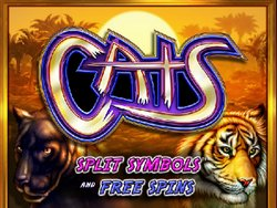 cats-liten